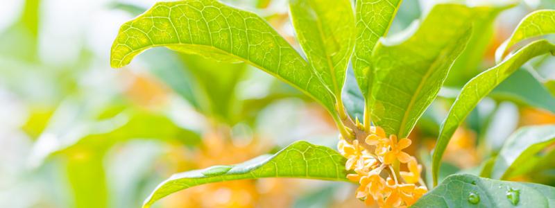 季節の香りを楽しもう! 秋の香りとお香の歴史